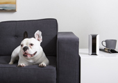 Canary Pro home security camera displayed on a table as a french bulldog lays on a couch